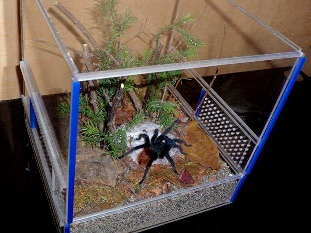 Террариум для птицееда для паука