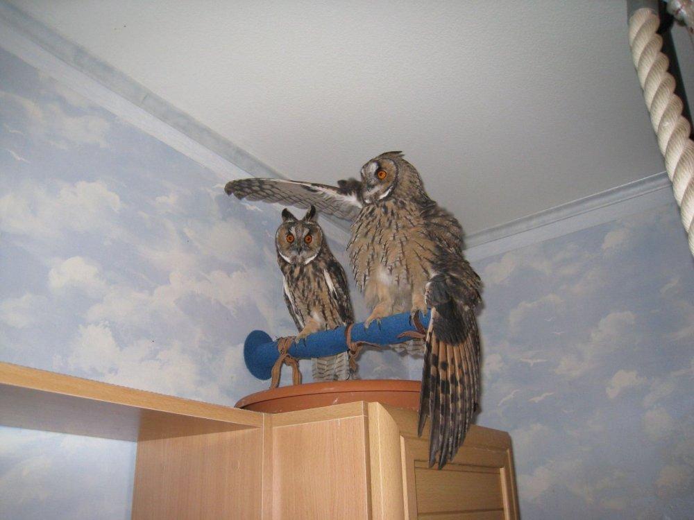 Чем кормить совёнка в домашних условиях 913