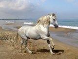 Андалузская лошадь в Томске