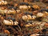 Бродячие муравьи в Чебоксарах