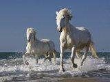 Лошадь камаргу в Чебоксарах