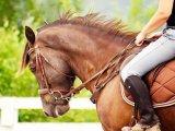 Американская порода лошадей в Чебоксарах