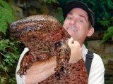 Японская исполинская саламандра в России