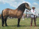 Белорусская упряжная лошадь в Чебоксарах