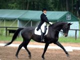 Вестфальская лошадь в Чебоксарах