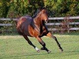 Английская лошадь в Томске