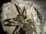 Южнорусский тарантул в Барнауле